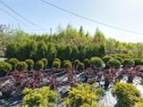 Базар растений