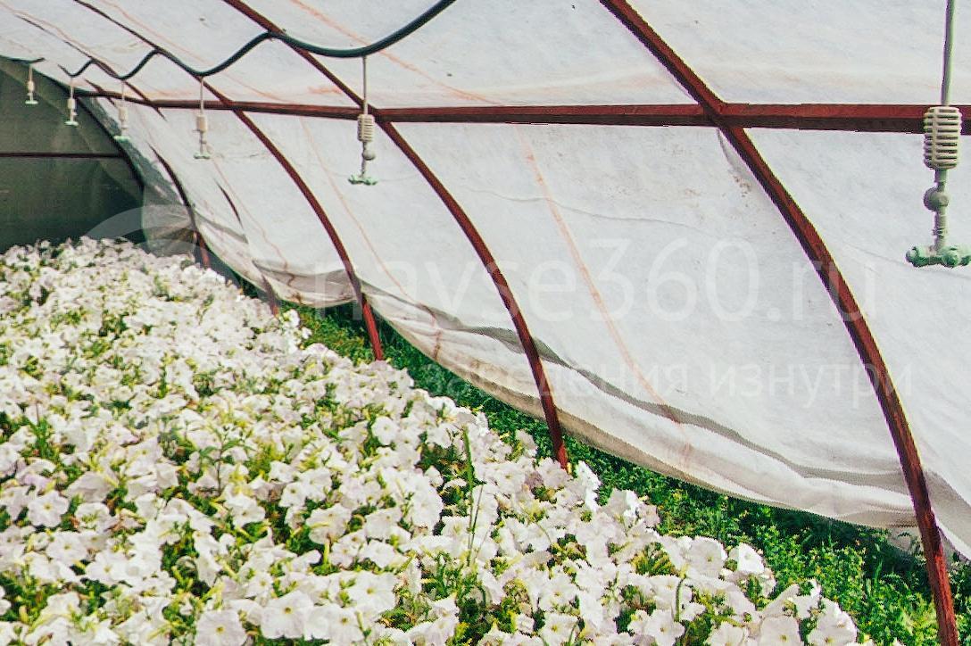 совхоз цветочный, рассада оптом краснодар 27
